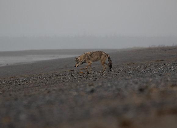 Grey Wolfs Beach