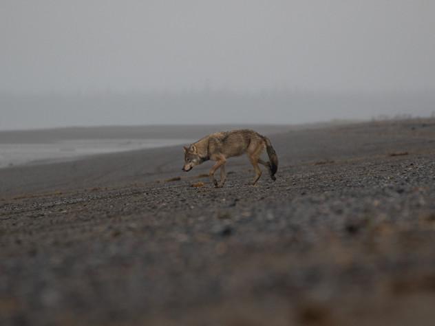 Grey Wolf's Beach
