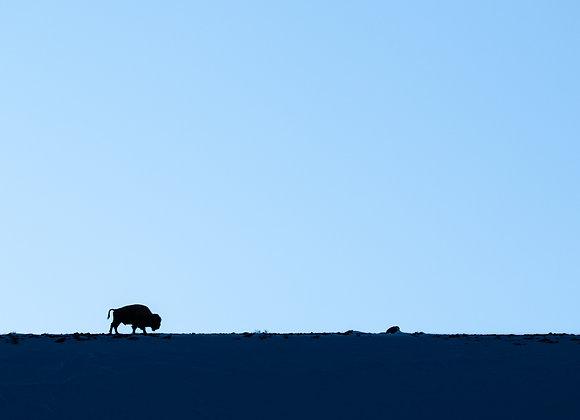 Blue Hour Bison