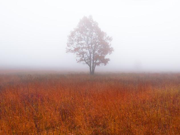 Shenandoah Autumn Fog