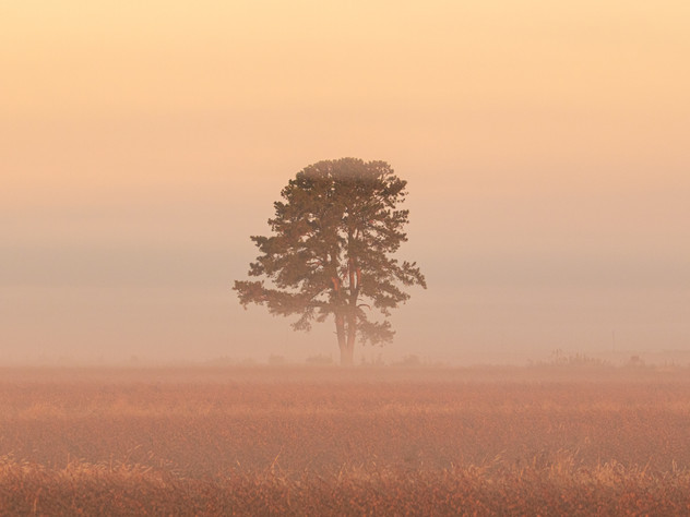 Dawn and a Tree