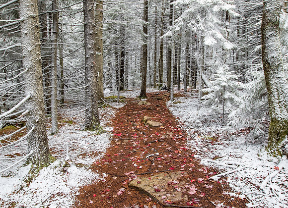 Winter of Fall