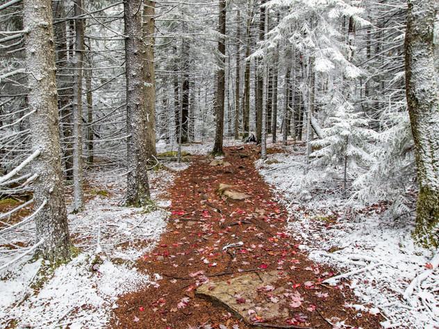 Winter or Fall