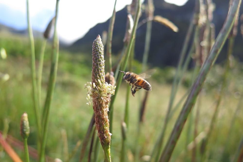 Bees at Palikū campsite in Haleakalā National Park Crater