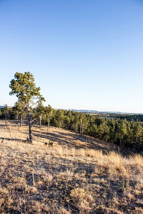 Facebook - The view from just under 5000ft in the Black Hills in Wind Cave Natio