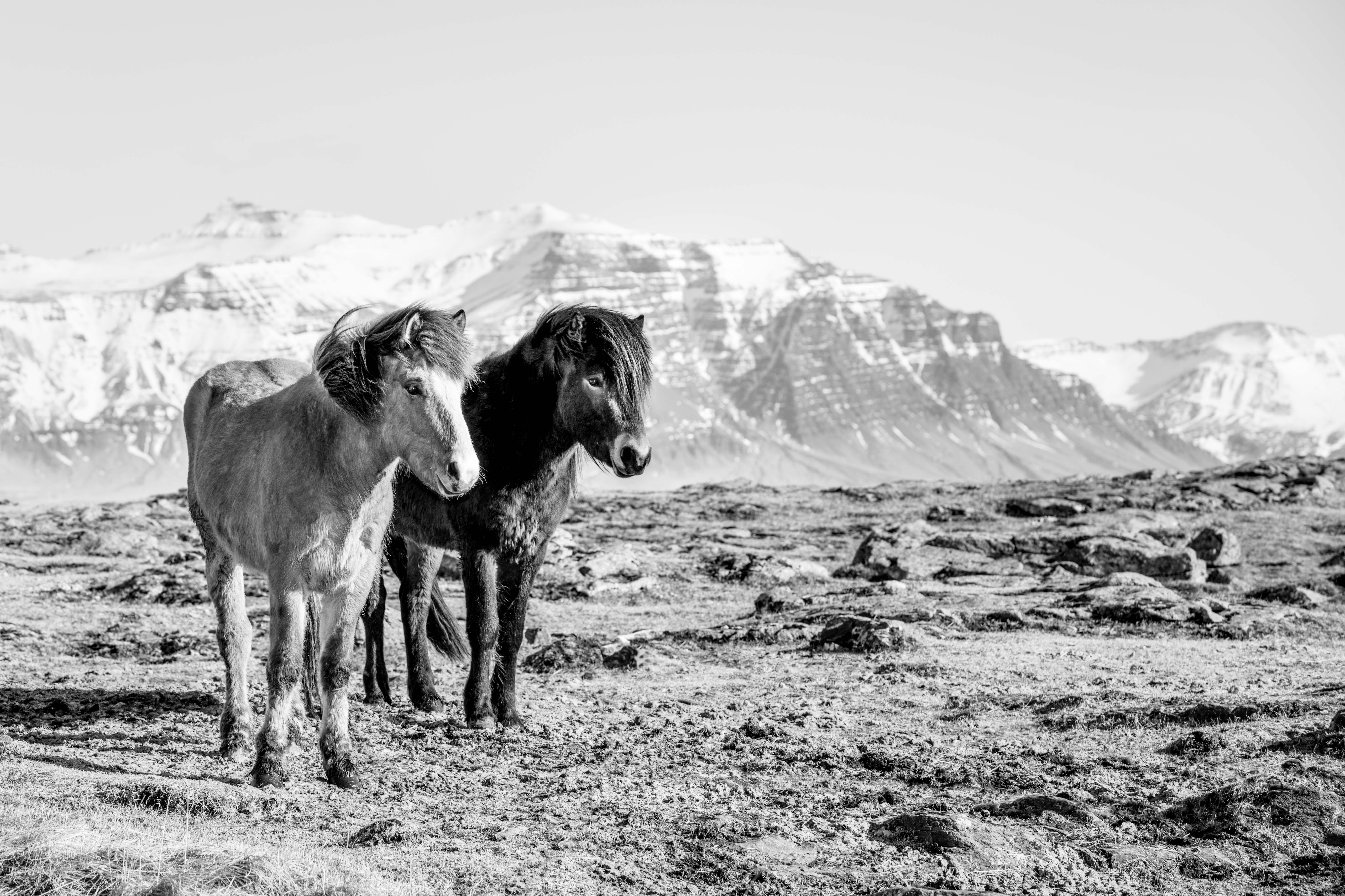Södulsholt ranch