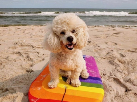 We have a WINNER! Pet Photo Contest Results