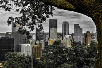 Tree Framed Pittsburgh