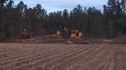 logging3