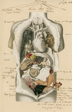 不毛な解釈、独立する臓器