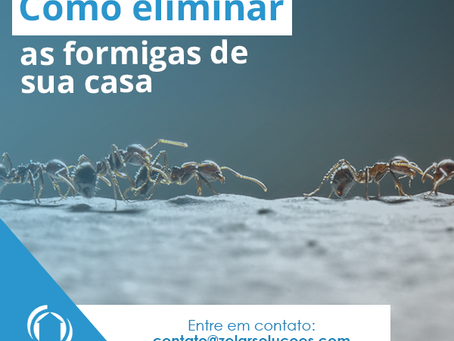 Aprenda a eliminar as formigas da sua cozinha