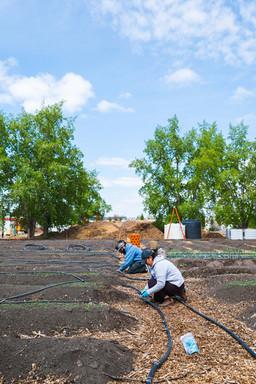 Highfield Irrigation Final-1035285.JPG