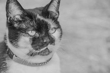 Ashtonishing Images pet photography