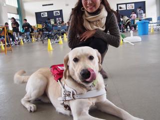 中部盲導犬協会の見学会に行ってきました