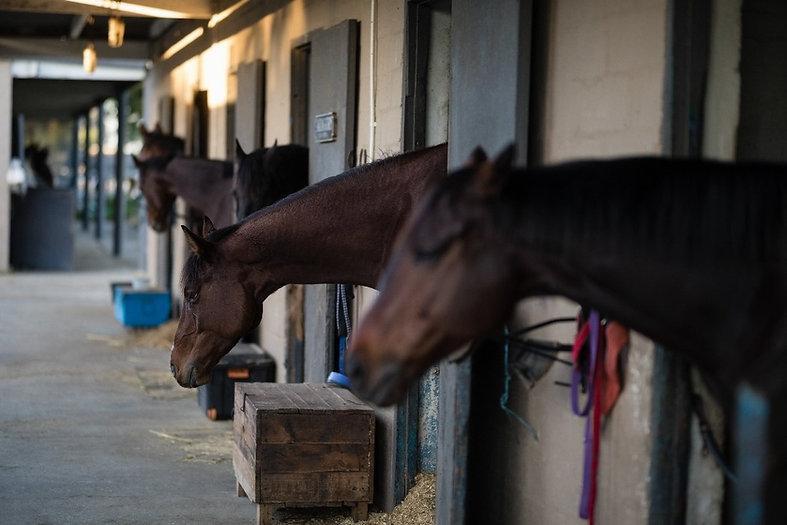 horse-in-stable-NBCTGH6_edited.jpg
