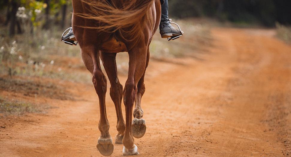 gallop horse 1.jpg
