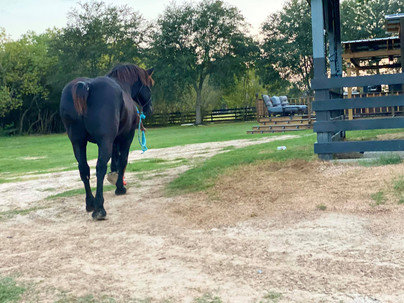 horse 3230.jpg