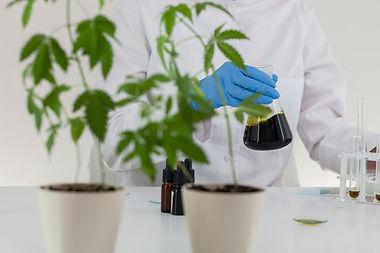 Cannabis Product Development