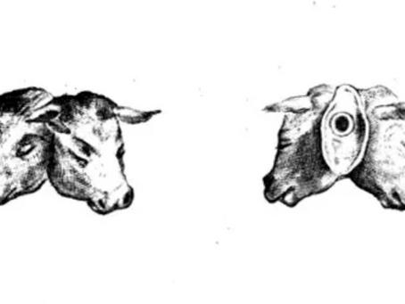 Il vitello a due teste della ex-poesia (Frammenti di Confessione)
