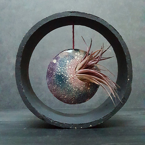 Black Clay Air plant Discs