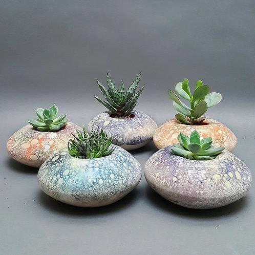 Desert Island Succulent Holders