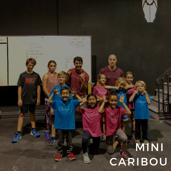 Mini caribou