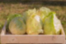 Radicchio variegato Casa Tironi