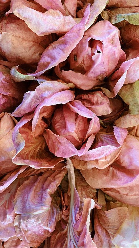radicchio rosa.jpg