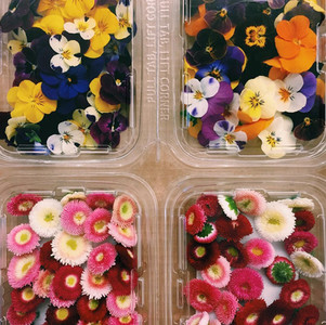Connubio perfetto tra bellezza e tavola: i fiori commestibili