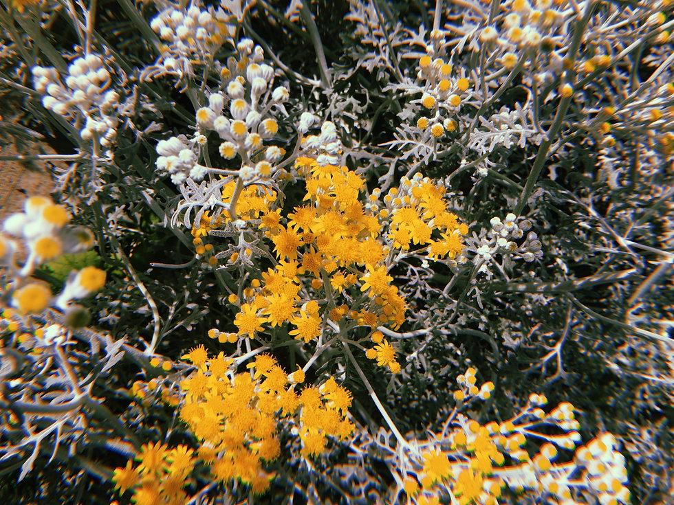 Floral_background_1.jpg