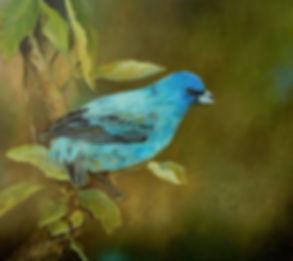 Gorrion Azul h20 w24.jpg