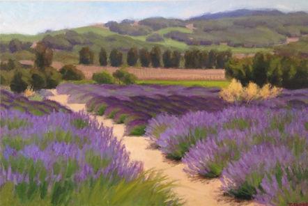 Lavender Field h24 w36.jpeg