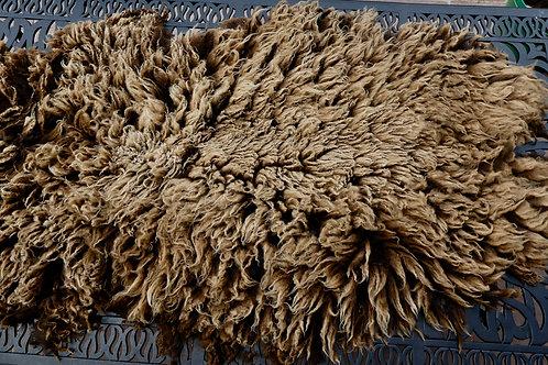 Moorit Shetland Fleece