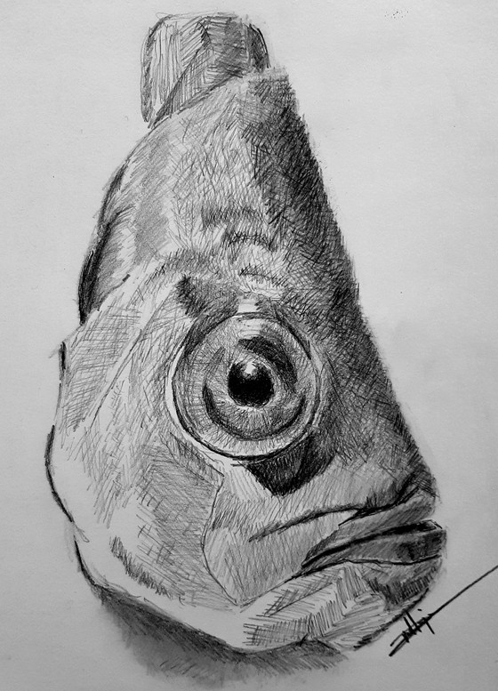 Graphite Fish Study Completed