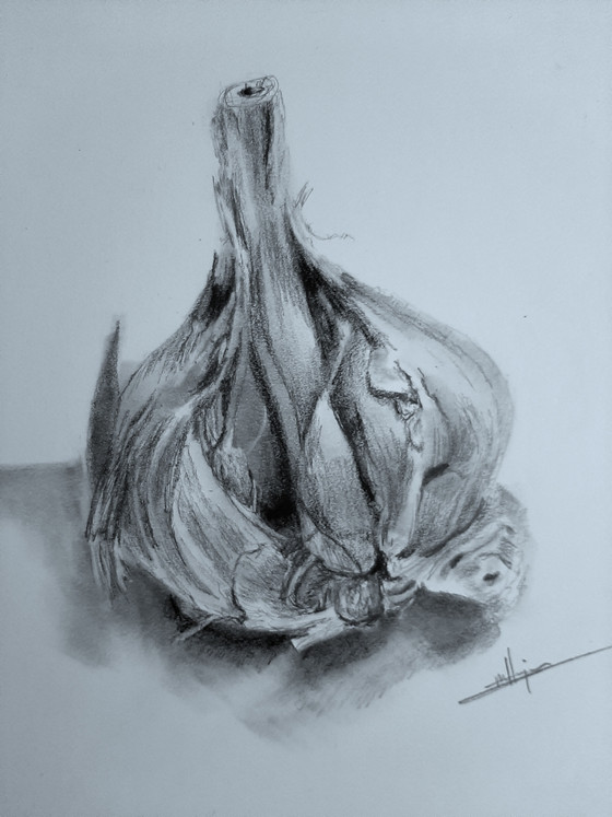 Garlic in Graphite