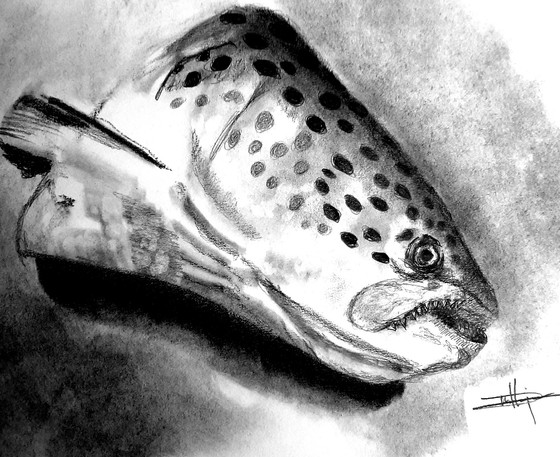 Charcoal Fish Study Completed