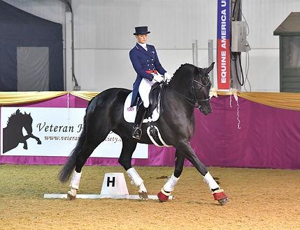 Veteran Horse Dressage