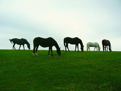 Horses at The Veteran Horse Society