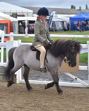 Veteran Horse society outdoor
