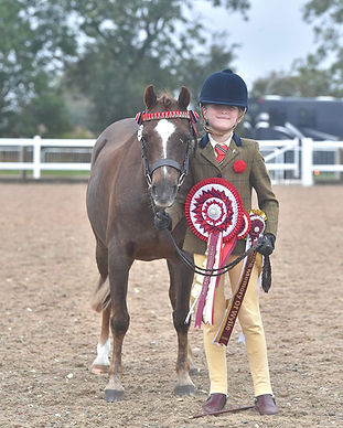 Direct and regional veteran horse society 2nd round