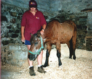 ben horse welfare