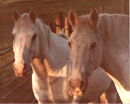 Minty and Soda Veteran Horse Society