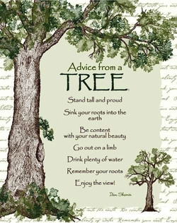 Advicefrom a tree stand tall and proud snk your roots into the earth be content with your