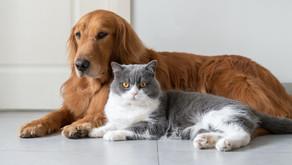 Imunoterapias para animais de companhia: uma nova chance para os nossos companheiros