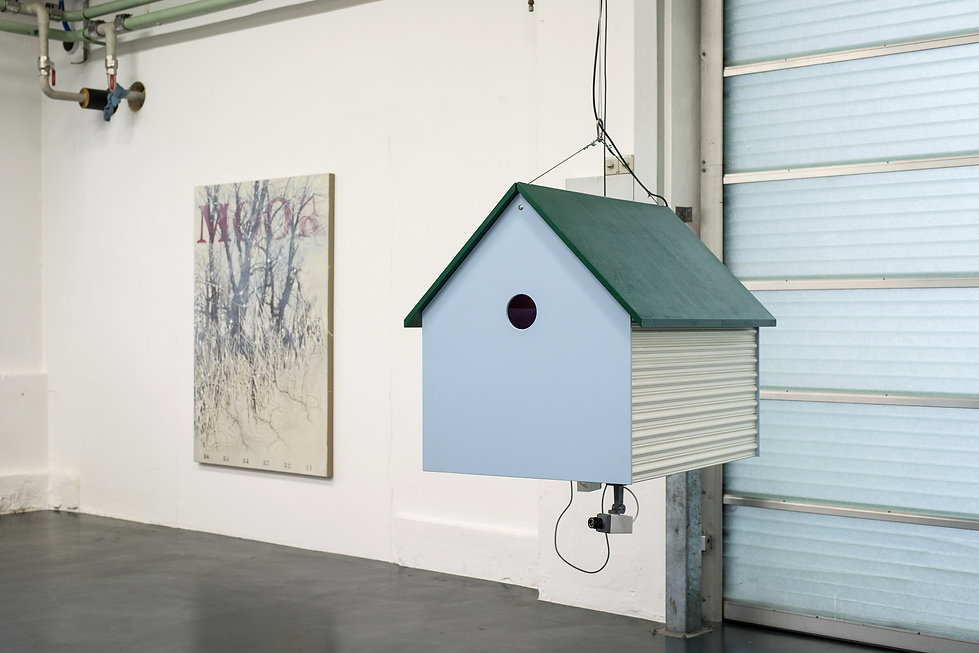 home sweet home, installatin, bird house, video, audio, cat, friend or foe, mia diener