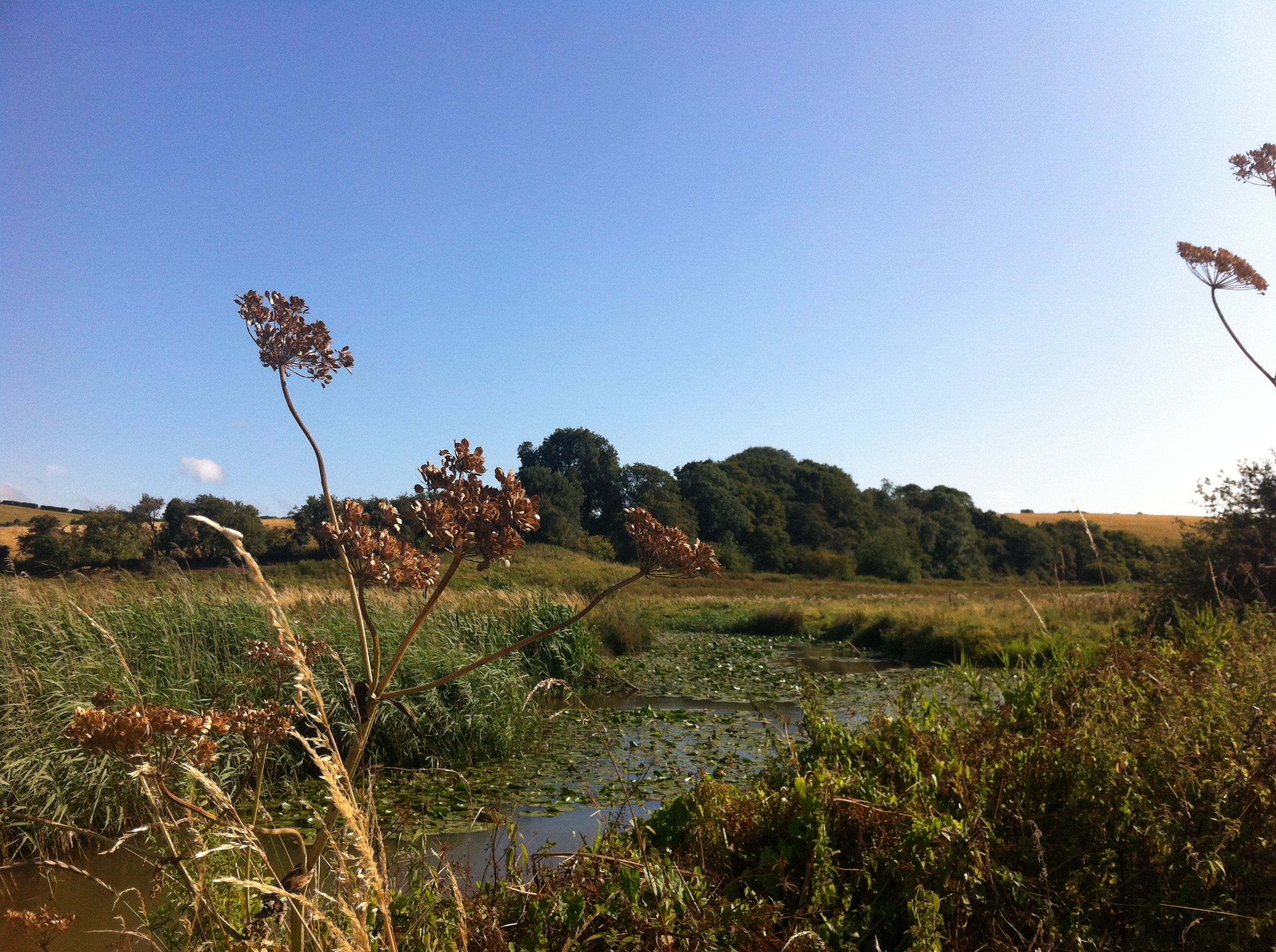 Brading Marshes Nature Reserve