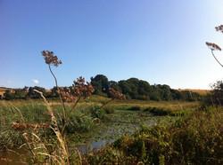 Brading Marshes Nature Reserve
