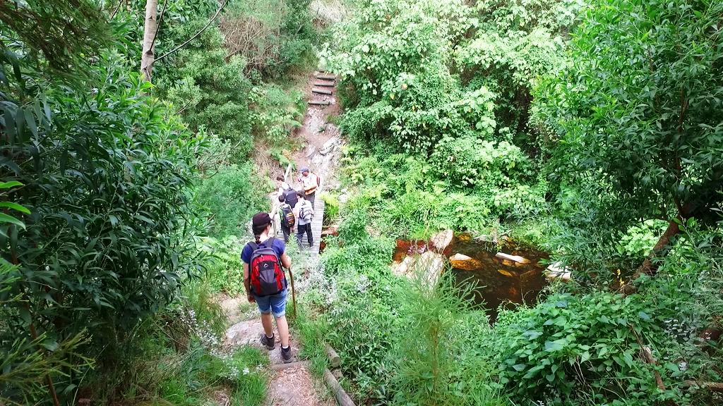 David Lane Trail Hiking Bridge
