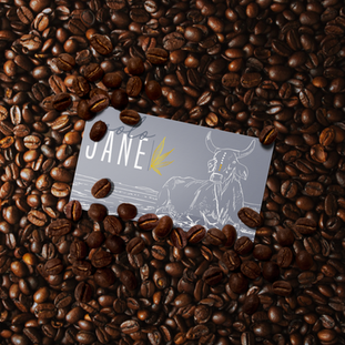 Molo Jane corporate identity