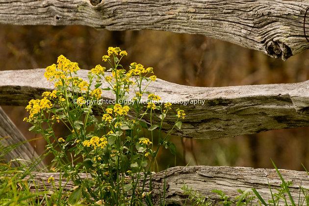 Parkway Flowers #2